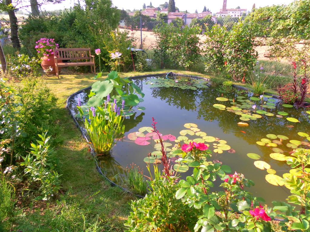 Laghetti ornamentali serendipity biolaghi arezzo for Laghetto da giardino per pesci